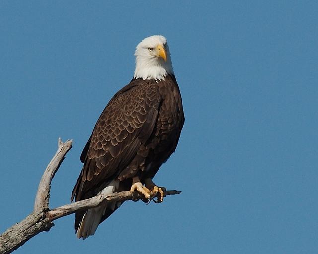 Used Car Lots Near Me >> ieatfood » eagles